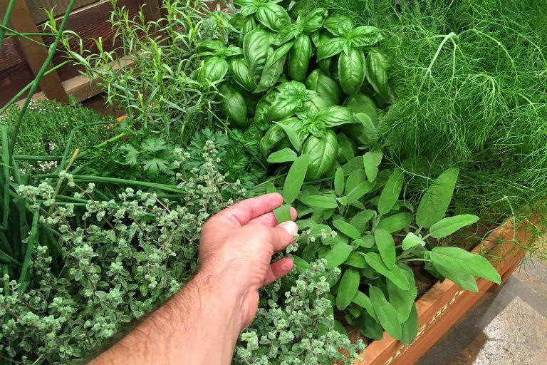 Como fazer (e manter) uma horta em casa - Viver a Vida
